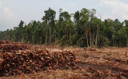 Obama's Biggest Climate Decision Of The Year May Be … Palm Oil?