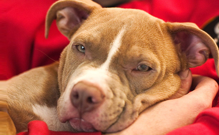 Victory! Cincinnati Repeals Breed Ban