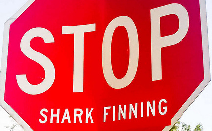 New York Considers Banning Shark Fin Soup