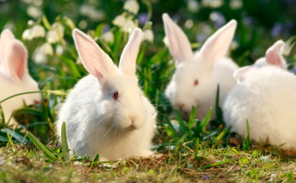 The Body Shop Joins Global Campaign to Stop Animal Testing