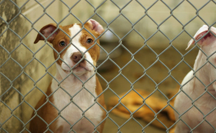 Hundreds of Animals Face Euthanasia at Overwhelmed Texas Shelter