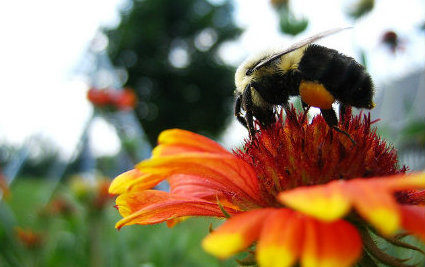 Bees Prefer Working Class Gardens Over Affluent Gardens