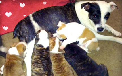 Rescuer Breaks Through Shed to Reunite Wild-Born Puppies and Mom