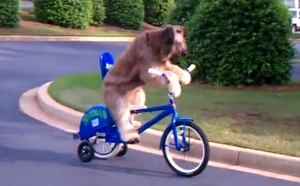 A Dog Takes His Bike For a Ride (Video)