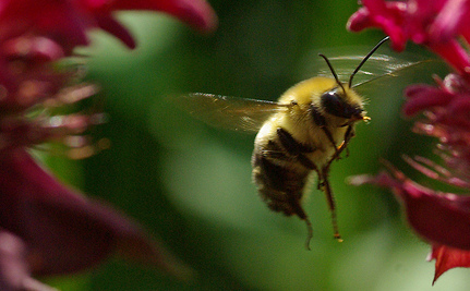 Common Pesticide Makes Honey Bees Picky Eaters
