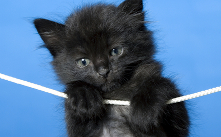 Flat Tire Leads Man to Find Kitten During 12 Mile Walk Home