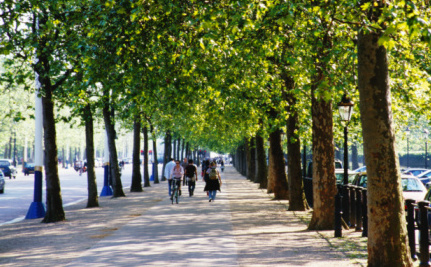 Can Planting More Trees Reduce Urban Crime Rates?