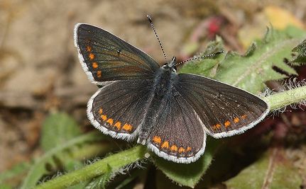 Global Warming's Unseen Effects on Plants and Butterflies