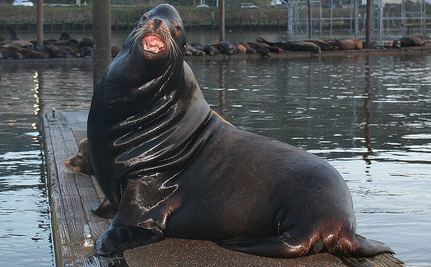 Who Is Shooting the Sea Lions Near the Columbia River?