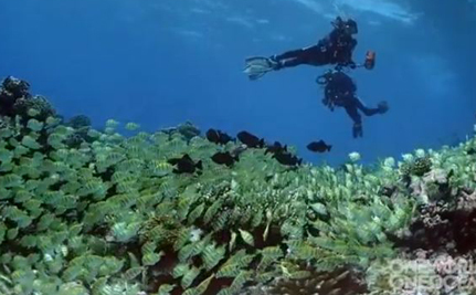 June 8 Is World Oceans Day! (Video)