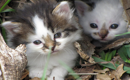 Death Of Six Kittens Brings Community Together