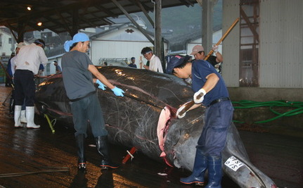 Yahoo! Profits from Illegal Slaughter of Whales
