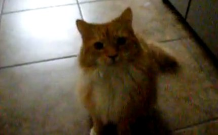 Who Says Cats Don't Do Tricks? (VIDEO)