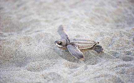 First Ever Map of Floating Plastic Aims to Save Baby Sea Turtles (Slideshow)
