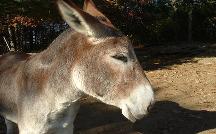 Heroic Donkey Keeps Buddies Calm And Safe In CO Wildfire