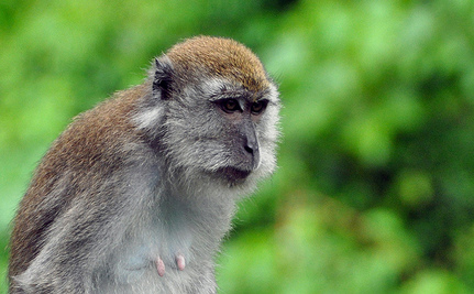 Success: EL-AL Airlines Will Stop Transporting Monkeys for Experimentation