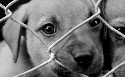 National Day of No Kill Saves Thousands of Animals
