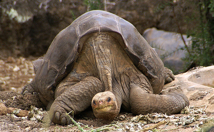 100-Year-Old Giant Tortoise, Last of His Subspecies, Dies (Video)