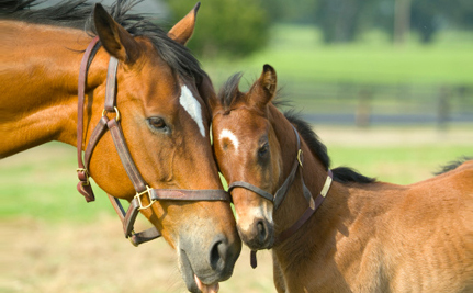 Urgent: Keep Horse Slaughter Out of the U.S.