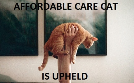 Cats React To Health Care Decision