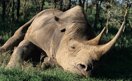 Let's Target the Rhino Crisis at Its Source