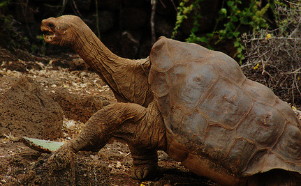 Should Lonesome George the Tortoise Be Stuffed?