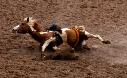Video Exposes Rodeo Cruelty to Horses and Calves