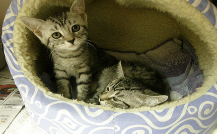 Teen Boys Face Felony Charges For Drowning Newborn Kittens