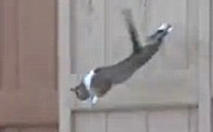 Cat Leaps To Safety Amid Blazing Inferno
