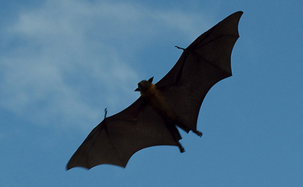 1,000s Of Bats Die Every Year From Wind Turbines: Can We Save Them?