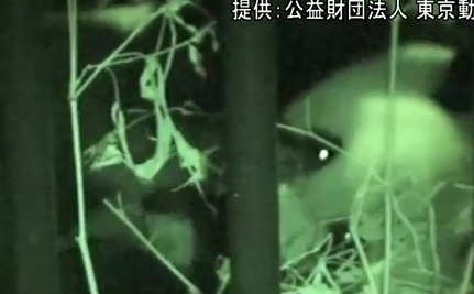 Baby Panda Dies After Less Than a Week in Tokyo (Video)