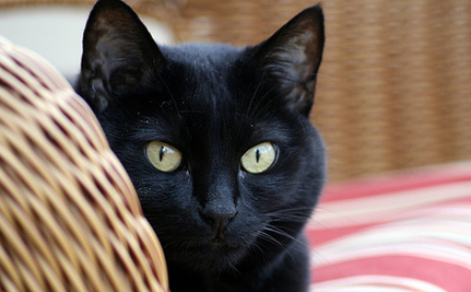 $13 Worth Of Good Luck: Adopt A Black Kitty On Friday The 13th!