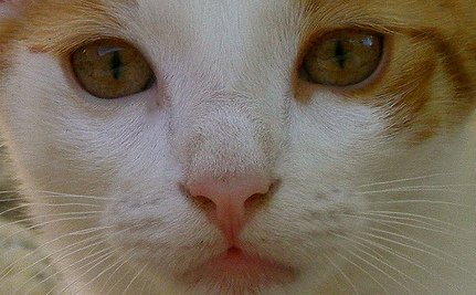 Stowaway Kitten Survives Weeks At Sea