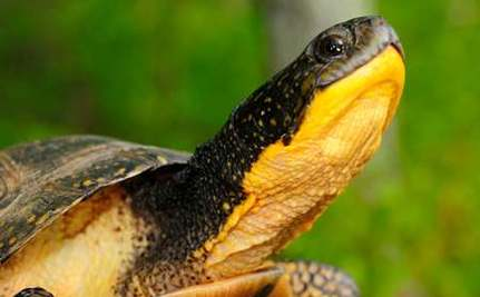 Record-Breaking Petition Filed to Protect Reptiles and Amphibians
