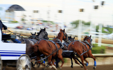 More Horses Die at Calgary Stampede