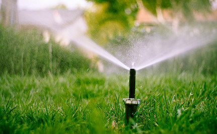 This Drought is an Opportunity to Think About Replacing Lawns with Gardens