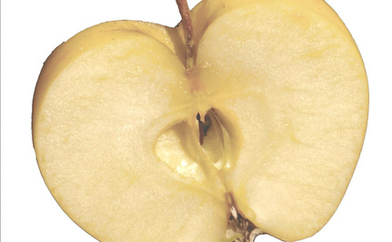 The GM Apple That Won't Turn Brown