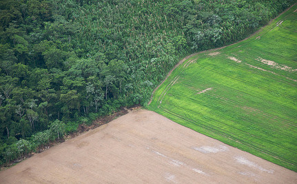 There's No Such Thing as Sustainable & Profitable Logging in Rainforests
