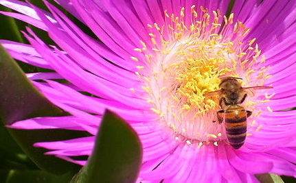 Buzz Off: EPA Denies Beekeeper Pesticide Petition