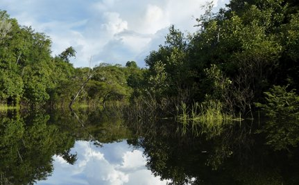 Success! Chevron Ordered to Pay $19 Billion for Environmental Damage