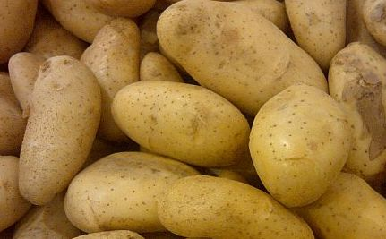 Ireland's Image Threatened by GM Potato