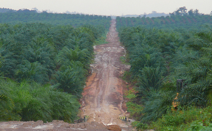 Cargill Admits Buying Palm Oil from Illegally Cleared Orangutan Habitat