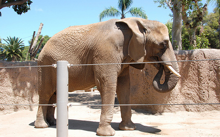 "Judge: Zoo ""Delusional"" to Believe Its Elephants are Happy"