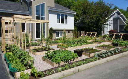 'Give Peas a Chance' Protest Saves Front Yard Vegetable Garden – Until Fall