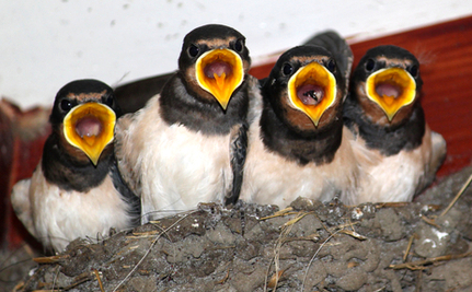 Baby Swallow Trapped 25 Feet Up Gets Unusual Rescue