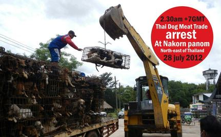 1,200 Dogs Saved from Meat Trucks: A Rush to Help Rescuers