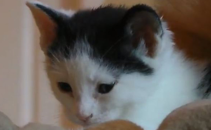 A Kitten, A Doberman, A German Shepherd (Cute Video)
