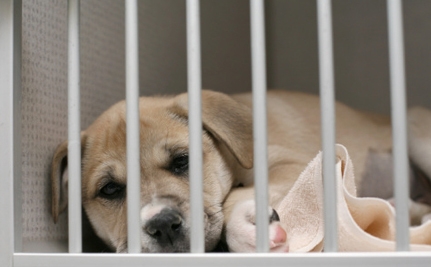 Homeless Pets Won't be Used in Experiments in the UK