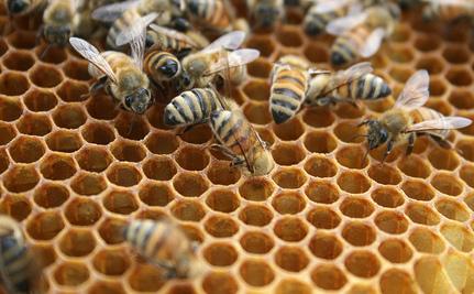 Honeybee Swarm Delays Flight at Pittsburgh Interna
