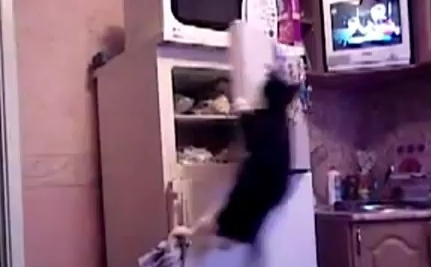Cat Jumps to Olympic Heights In the Kitchen (Video)